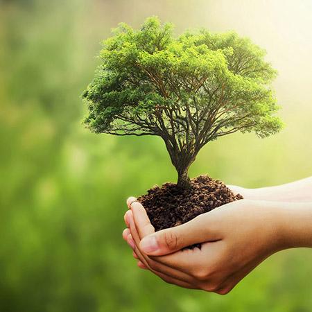 sostenibilidad 1